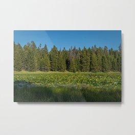 Lilypad Lake, Yellowstone National Park Metal Print