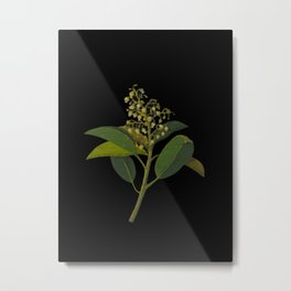 Arbutus Andrachne, Mary Delany Delicate Paper Flower Collage Black Background Floral Botanical Metal Print
