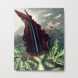 Robert John Thornton - The Dragon Arum Metal Print
