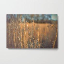 Evening Field Metal Print