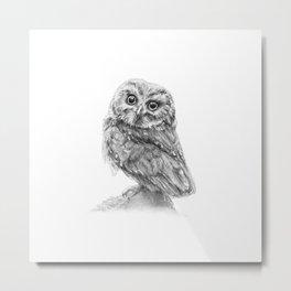 The Northern Saw-whet Owl Metal Print