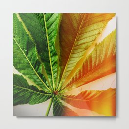 Leaf photo with vivid colors and nice grain Metal Print