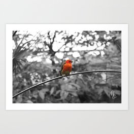 Red bird Art Print