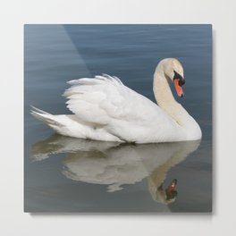 Reflection of Swan Square Metal Print
