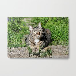 Thinking Cat in Sunlight Portrait Photography Metal Print
