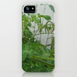 Spot the Curve-tailed Bush Katydid Grasshopper on Tomato Plant 1 iPhone Case