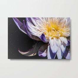 Tropical Water Lily Metal Print
