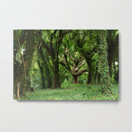 Tree of Life, Honolua Bay, Hawaii Metal Print