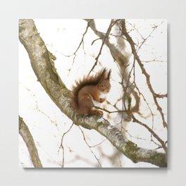 Little Squirrel On The Branch - Autumn Scene #decor #society6 #buyart Metal Print