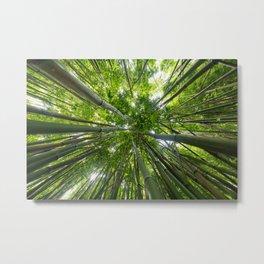 Looking Up A Bamboo Forest Canopy, Haleakala, Maui, Hawaii Metal Print