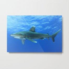 Oceanic Whitetip Shark 2 Metal Print