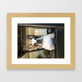 French Bull  Dog  Puppies Framed Art Print