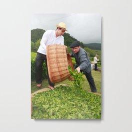 Working in the tea gardens Metal Print