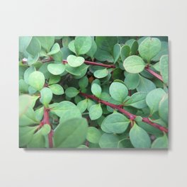 Green Barberry Metal Print