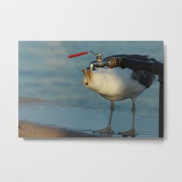 Seagull Bird Drinking from a tap Metal Print