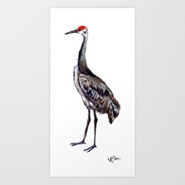 Sandhill Solitaire of Noble Guardians cranes series Art Print