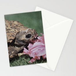 Maui Flower Turtle Stationery Cards