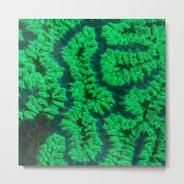 Fluorescent coral Metal Print