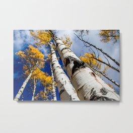 Blue Bird Sky. Autumn in Colorado. Metal Print
