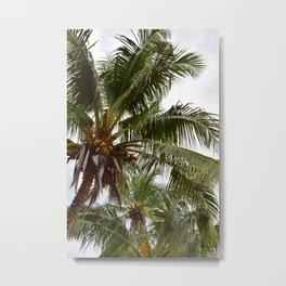Costa Palms Metal Print
