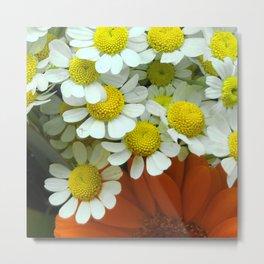 Daisies Caressing Red Flower Metal Print