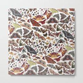 Moths of North America Pattern Metal Print