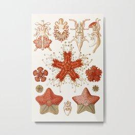 Starfish Vintage Illustration Metal Print