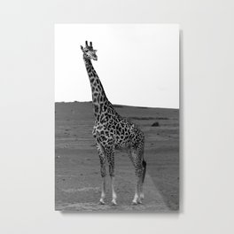 African Male Giraffe Metal Print