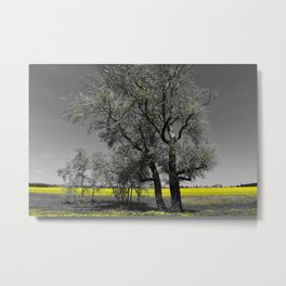 The Beauty of Canola Fields Metal Print