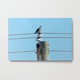 Pigeon on a Pole Metal Print