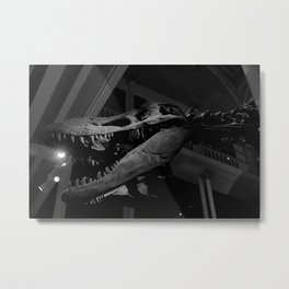 Tyrannosaurus Rex Museum Fossil Piece In Black and White Metal Print