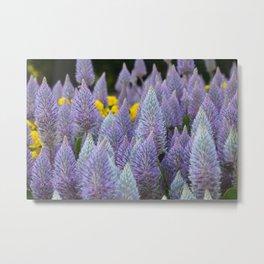 Fox tail Flowers Metal Print