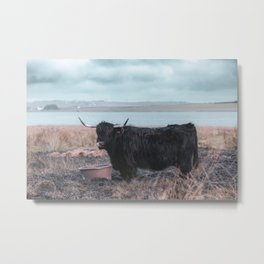 Vintage photography - Highland Cow, Thurso, Scotland Metal Print