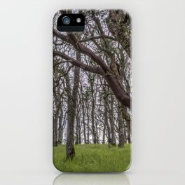 Madrone Forest iPhone Case