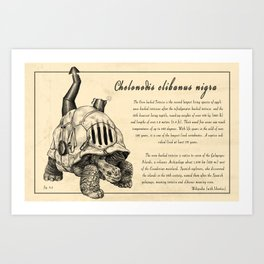 Oven Backed Tortoise Art Print