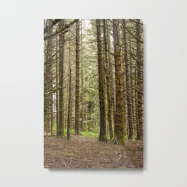 Old Growth Forest Photography Print Metal Print