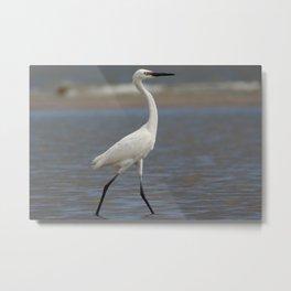 White Morph Reddish Egret Metal Print