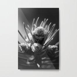 aspirations of the pinecone Metal Print