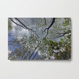 Tree canopy in the spring Metal Print
