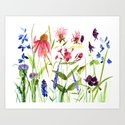 Botanical Colorful Flower Wildflower Watercolor Illustration by betweentheweeds