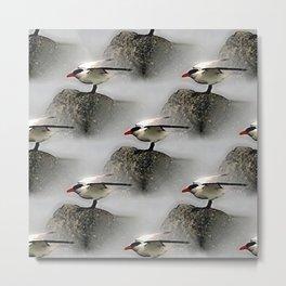 Seagulls on rocks Metal Print