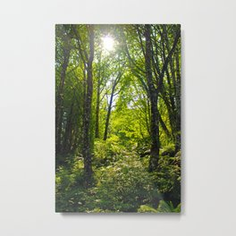 Green Sunny Forest Metal Print