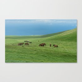 Grazing horses at the meadows of Kohala on the Big Island of Hawaii Canvas Print