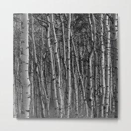 Aspen Forest, Utah Metal Print