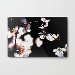 Beautiful Sunlit Japanese Apricot Flowers On Black Metal Print