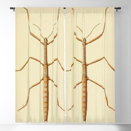 Antique Stick Insect Blackout Curtain