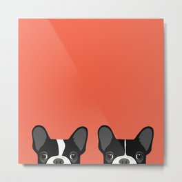 Pied Frenchies Metal Print