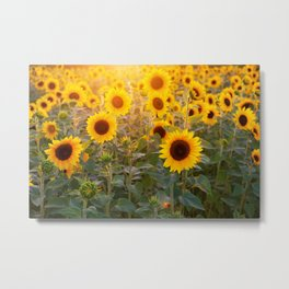 Sunflowers Field Landscape Metal Print