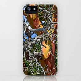 MADRONA TREE DEAD OR ALIVE iPhone Case