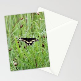 Black Swallowtail Butterfly in the Grass Stationery Cards